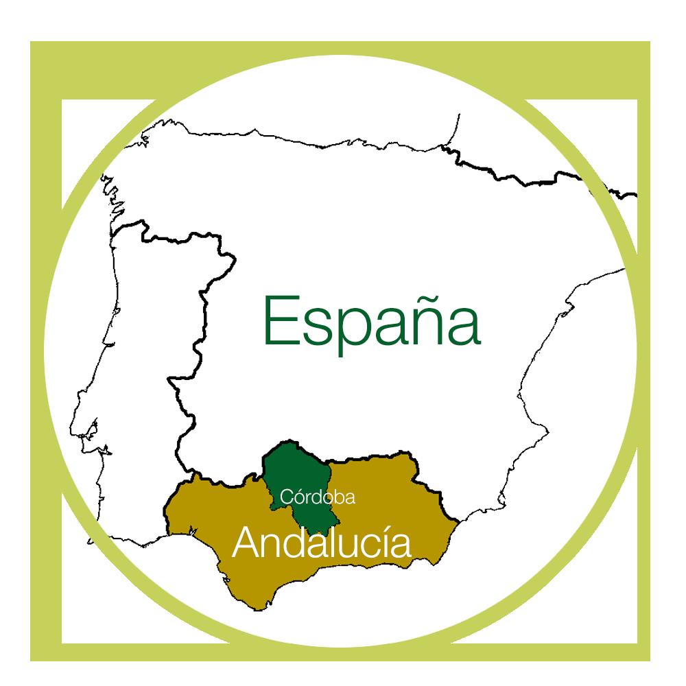 Zona de olivares en Córdoba